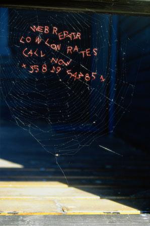 marketing-for-spiders.jpg